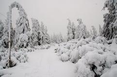 Winterwald bedeckt im Schnee Lizenzfreies Stockbild