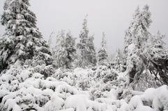 Winterwald bedeckt im Schnee Stockfoto