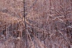 Winterwald bei Sonnenuntergang Lizenzfreies Stockbild