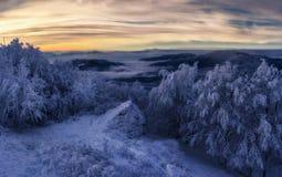 Winterwald bei Sonnenuntergang lizenzfreies stockfoto