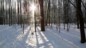 Winterwald, beleuchtet durch die Sonne stock video footage
