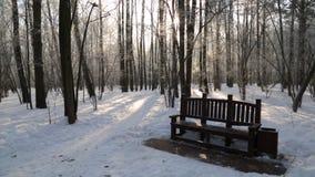 Winterwald, beleuchtet durch die Sonne stock footage