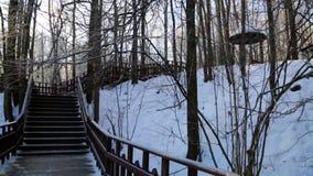 Winterwald, beleuchtet durch die Sonne, die Treppe in stock footage