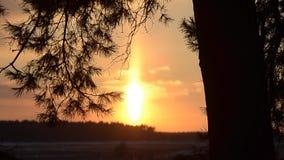 Winterwald, brennender Sonnenuntergang im Winterwald, Sonne belichtet Niederlassungen der Fichte, funkelnde Schneeflocken stock video footage