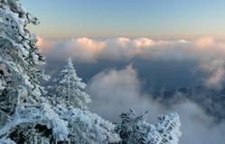 Winterwald in den Bergen der Karpaten Stockbild