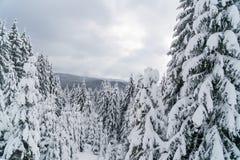 Winterwald in den Bergen mit weißen Tannenbäumen Stockbild