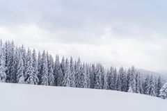 Winterwald in den Bergen: schneebedeckte Tannenbäume und Hügel auf Hintergrund Lizenzfreie Stockbilder
