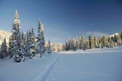 Winterwald in den Bergen, Skispur Lizenzfreies Stockbild