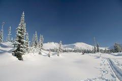 Winterwald in den Bergen, Skispur Stockfotografie