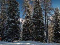 Winterwald in den Schweizer Alpen Lizenzfreie Stockfotos