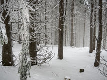 Winterwald. A dense, snow covered ans foggy forest Royalty Free Stock Photos