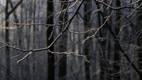 Winterwald, der Schnee fällt, der Schnee auf stock video footage