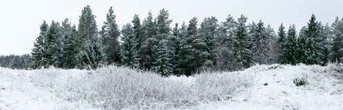 Winterwald in der SuwaÅ-'ki Region in nordöstlichem Polen lizenzfreie stockfotografie