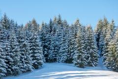 Winterwald in der Wildnis stockbilder
