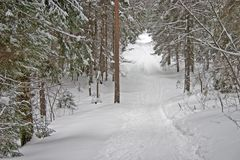 Winterwald. Hügel Lizenzfreies Stockfoto