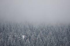 Winterwald im Nebel Lizenzfreies Stockfoto