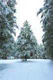 Winterwald im Schnee stockfotografie