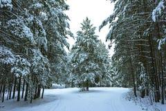 Winterwald im Schnee stockbilder