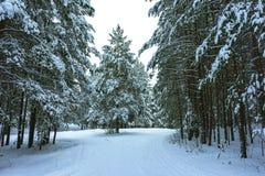 Winterwald im Schnee stockfoto