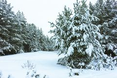 Winterwald im Schnee lizenzfreie stockfotografie