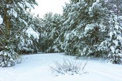 Winterwald im Schnee stockfotos