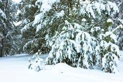 Winterwald im Schnee lizenzfreie stockbilder