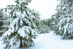 Winterwald im Schnee lizenzfreies stockbild