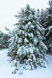 Winterwald im Schnee stockbild