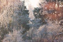 Winterwald landscape3 lizenzfreie stockfotos