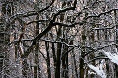 Winterwald mit frischem Schnee Lizenzfreie Stockfotografie