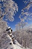 Winterwald mit Raureif auf Bäumen Lizenzfreie Stockbilder