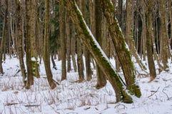 Winterwald mit Schnee Stockfotos
