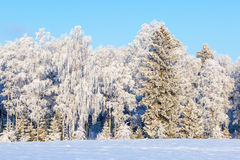 Winterwald mit Schnee und Frost Lizenzfreies Stockbild