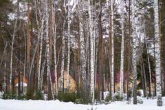 Winterwald mit Schnee und Häusern stockbild