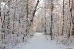 Winterwald mit schneebedeckten Niederlassungen von Bäumen feenhafte Schönheit Stockfoto