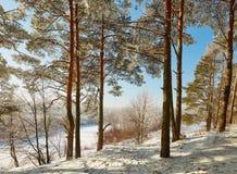 Winterwald mit schneebedeckten Niederlassungen von Bäumen feenhafte Schönheit Stockbilder