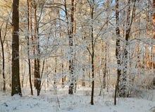 Winterwald mit schneebedeckten Niederlassungen von Bäumen feenhafte Schönheit Stockfotos