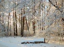Winterwald mit schneebedeckten Niederlassungen von Bäumen feenhafte Schönheit Lizenzfreie Stockfotografie