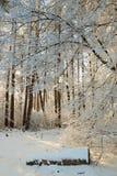 Winterwald mit schneebedeckten Niederlassungen von Bäumen feenhafte Schönheit Lizenzfreie Stockbilder