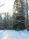 Winterwald am Morgen und am Skifahrer Stockbild