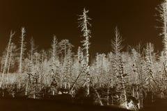 Winterwald, nachdem Öl und Erdgasfeld Öl Aganskoye gefüllt worden sind stockbilder