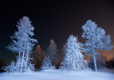 Winterwald nachts Stockfotografie