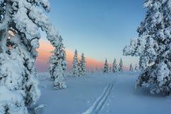 Winterwald in Nord-Finnland Lizenzfreie Stockfotos