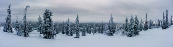 Winterwald in Nord-Finnland Stockfotografie