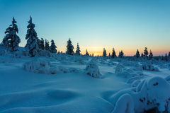 Winterwald in Nord-Finnland Stockbild