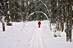 Winterwald. Roter Skifahrer Stockfotos