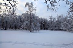 Winterwald in Russland Stockfotos