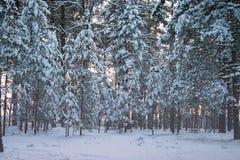 Winterwald unter Schnee Stockfoto