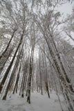 Winterwald unter Schnee Stockfotos