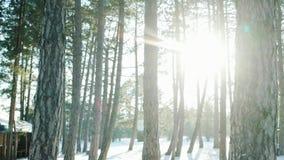 Winterwald, viele Bäume im Schnee, die Sonne ` s Strahlen glänzen durch Bäume in der Hintergrundbeleuchtung, das Los Schnee liege